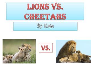 LIONS VS. CHEETAHS