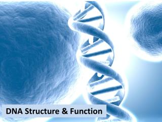 DNA Structure & Function