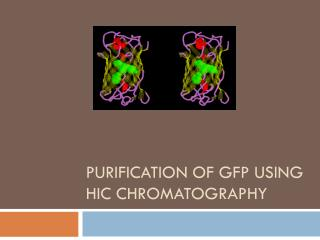 Purification of GFP using  HIC Chromatography