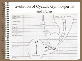 Evolution of Cycads, Gymnosperms  and Ferns