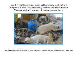 Dew Paws Rescue & Friends & Almost  Furgotten  Animal Rescue, Santa Fe and Clovis NM.