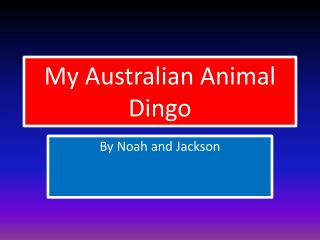 My Australian Animal Dingo