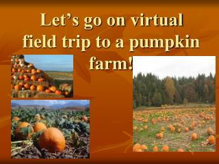 Let's go on virtual field trip to a pumpkin farm!