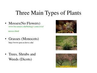 3 Types of Plants