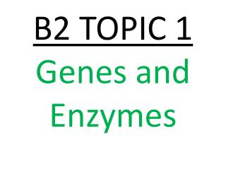 B2 TOPIC 1  Genes and Enzymes