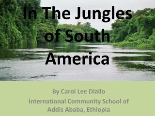 In The Jungles of South America