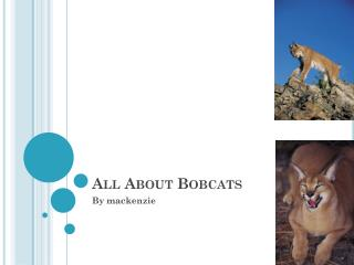 All About Bobcats