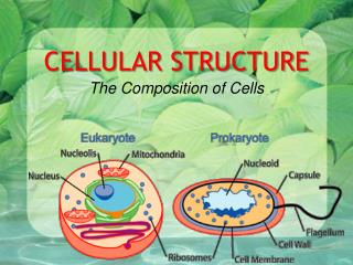 CELLULAR STRUCTURE