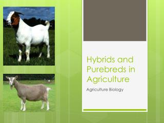 Hybrids and Purebreds in Agriculture