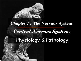 Chapter 7 :  The Nervous System Central Nervous System , Physiology & Pathology