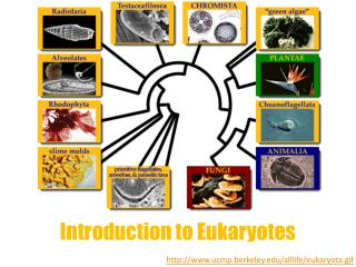 Introduction to Eukaryotes