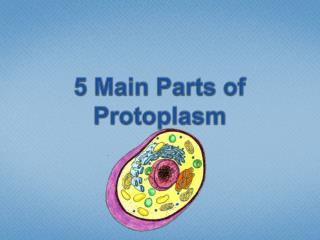 5 Main Parts of Protoplasm