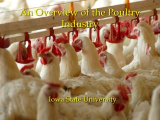 An Overview of the Poultry Industry