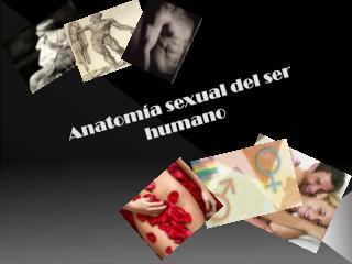 Anatom�a sexual del ser  humano