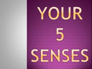 your  5  Senses