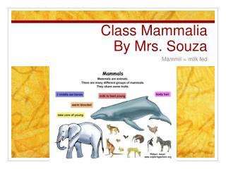 Class  Mammalia By Mrs. Souza