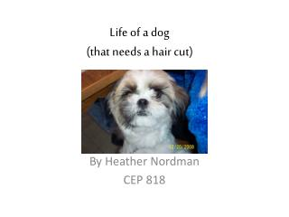Life of a dog (that needs a hair cut)