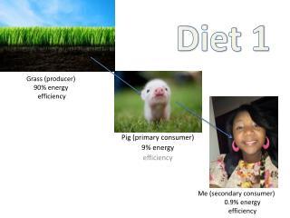 Grass (producer) 90% energy  efficiency