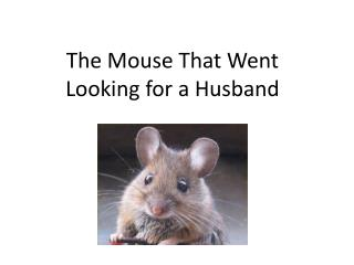 The Mouse  That Went Looking for a Husband