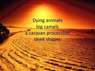 Dying animals big camels a caravan procession sleek  shapes