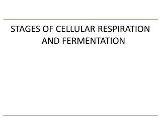 STAGES OF CELLULAR RESPIRATION  AND FERMENTATION