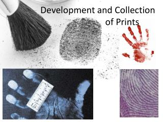 Development and Collection     of Prints