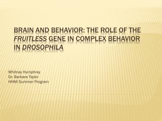 Brain and Behavior: The Role  of the  fruitless  gene  in Complex Behavior  in  Drosophila