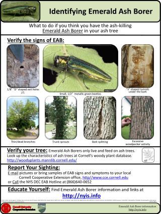 Identifying Emerald Ash Borer