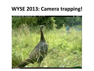 WYSE 2013: Camera trapping!