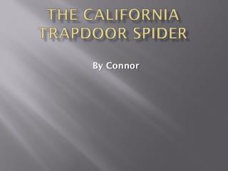 The California Trapdoor spider