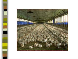 Dioxin-Contaminated Chicken Environmental Health Disaster Scenarios.