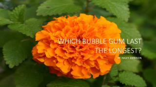 Which Bubble Gum Last the Longest?