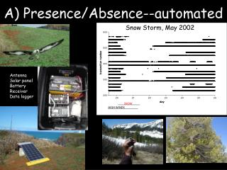 A) Presence/Absence--automated