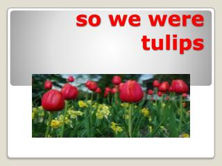 so  we were tulips