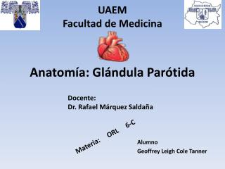 Anatomía: Glándula  Parótida