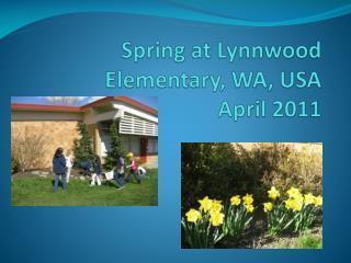 Spring at Lynnwood Elementary, WA, USA April 2011