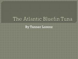 The Atlantic Bluefin Tuna