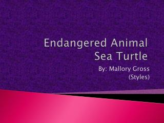 Endangered Animal Sea Turtle