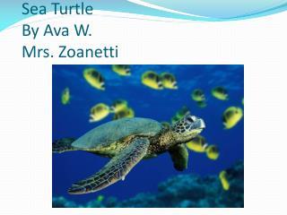 Sea Turtle By Ava  W. Mrs. Zoanetti