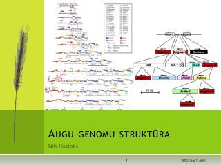 Augu genomu struktūra