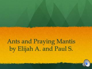 Ants and Praying Mantis by Elijah A. and Paul S.