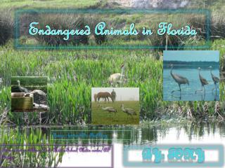 Endangered Animals in  F lorida