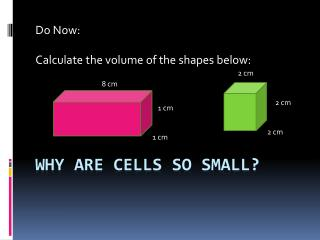 Why are cells so small?