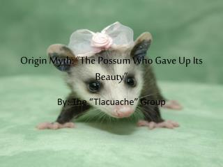"Origin Myth: ""The Possum Who Gave Up Its Beauty"""
