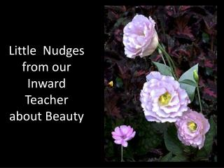 Little   Nudges  from our Inward Teacher about Beauty