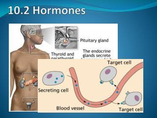 10.2 Hormones