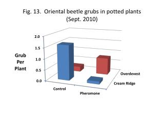 Fig. 13.  Oriental beetle grubs in potted plants  ( Sept. 2010 )