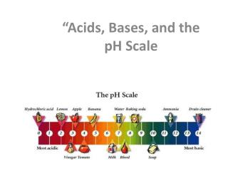 """Acids, Bases, and the pH Scale"