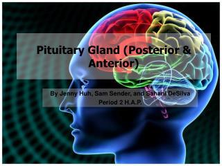 Pituitary Gland (Posterior & Anterior)