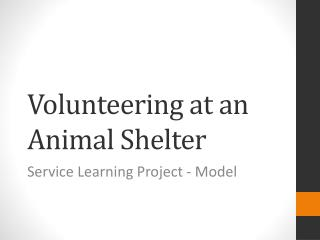 Volunteering at an Animal Shelter